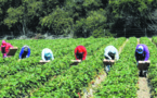 La femme marocaine marginalisée  sur le marché du travail