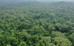 Les forêts tropicales risquent d'émettre plus de CO2