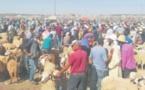 Sept souks de bétail fermés pour non-respect des mesures sanitaires requises