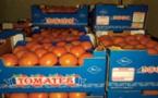 Avis de tempête sur les exportations agrumicoles ?