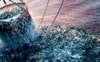 Hausse de la valeur des produits commercialisés de la pêche côtière et artisanale