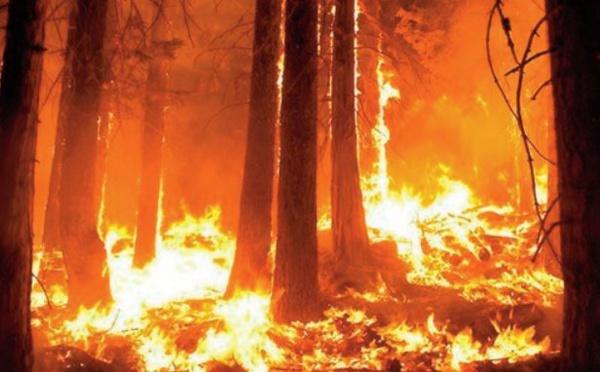 Pouvons-nous empêcher l'incendie mondial la prochaine fois ?