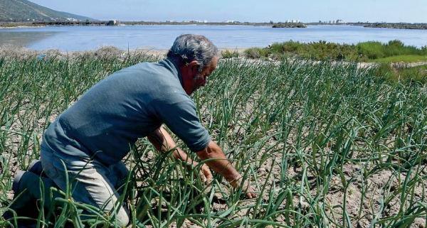 Un système unique de culture sur sable pour contrer la pénurie d' eau en Tunisie