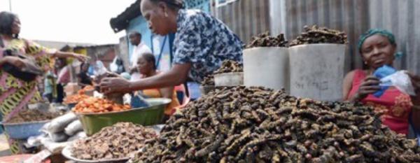A Kinshasa, on croque chenilles ou larves pour le plaisir ou leurs protéines
