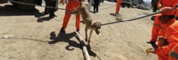 Le sort tragique des chiens errants de Kaboul, capturés et empoisonnés