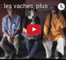 Actuelles: Inde : les vaches, plus sacrées que les femmes ?