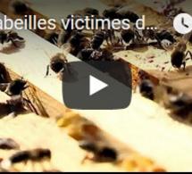 Les abeilles victimes de la sécheresse au Portugal