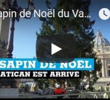 Le sapin de Noël du Vatican est arrivé