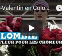Saint-Valentin en Colombie : une fleur pour les chômeurs