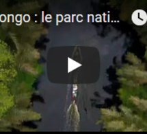 RD Congo : le parc national de la Salonga, paradis des biologistes