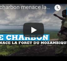 Le charbon menace la forêt au Mozambique
