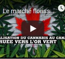 Le marché florissant du cannabis