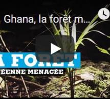 Ghana, la forêt menacée