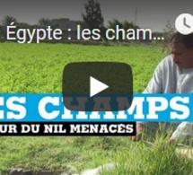 Égypte : les champs autour du Nil menacés