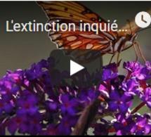 L'extinction inquiétante des insectes alarme les scientifiques