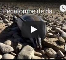 Hécatombe de dauphins sur le littoral atlantique : 2019, une année record ?
