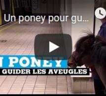 Un poney pour guider les aveugles au Royaume-Uni