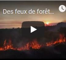 Des feux de forêts importants touchent l'Amazonie, Bolsonaro accuse les ONG