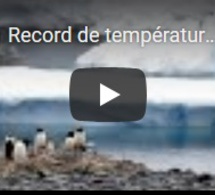 Record de température en Antarctique : plus de 20° enregistrés