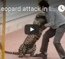 Leopard attack in India