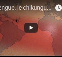 La dengue, le chikungunya et le zika