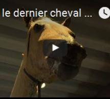 Vizir, le dernier cheval de Napoléon, en cours de restauration