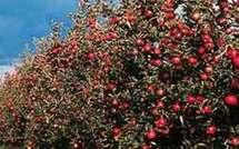 Appel à inclure le projet d'arboriculture fruitière du MCC au « Plan Vert »