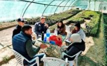 Farmer-to-Farmer à la rescousse de quatre coopératives marocaines