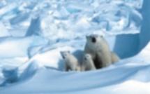 En Arctique, la banquise fond plus vite que prévu
