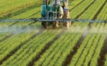 L' agriculture, une résilience à toute épreuve en 2020