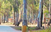 Issam Ahabri: Il faut rattraper 30 années de dégradation de la forêt