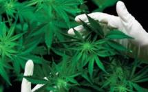 La légalisation du cannabis franchit un nouveau pas