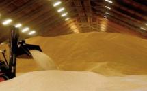 Les stocks mondiaux de céréales devraient enregistrer leur première hausse depuis 2017-2018