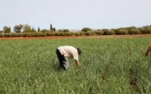L' agriculture biologique à Fès-Meknès, un marché à fort potentiel