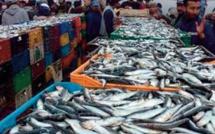 Hausse de la valeur des produits de la pêche commercialisés de 35% au premier semestre