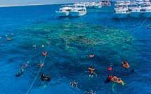 En Egypte, les coraux perdent leurs couleurs et le monde une protection