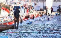 Hausse de 29% en valeur des produits de la pêche à Safi